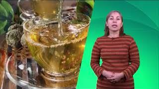 Доктор Елена Кузьмина в рубрике ЗОЖ. Иван-чай для молодых мам и детей