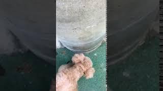 愛犬の散歩中、電柱に耳があたって他の犬のマーキング(オシッコ)がつくことありませんか?