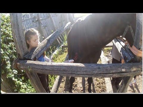 Глубокая рванная рана у лошади. Лечение