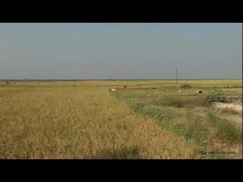 [HD] A typical autumn morning in an Indian village in Bihar, ghosaith (Village Ghosaith, Bihar)