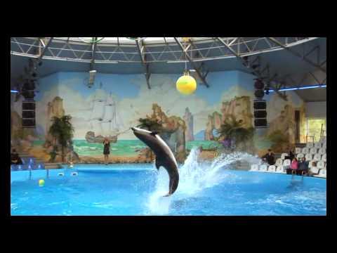 Киевский дельфинарий  Dolphin