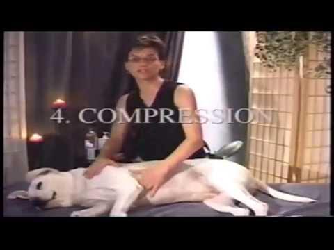 At Home Canine Massage Demonstration