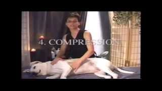 At Home Canine Massage Demonstration