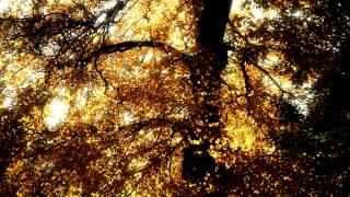 Podzimní melancholie / Autumnal Melancholy