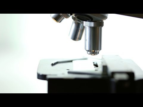 Scientist Using a Lab Microscope - Free Stock Video Download - Free Stock Video Footage