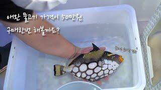 몬스터급 애완 해수어 물고기 가격은 50만원! 한번 사…
