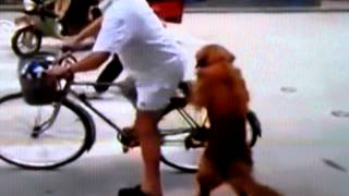 Golden Retriever Guards Owner's Bicycle, Then Hops Aboard For A Ride In China