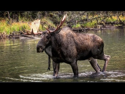 """""""The Ponds"""" – Part 1 to an epic Moose hunt in the wilds of British Columbia"""