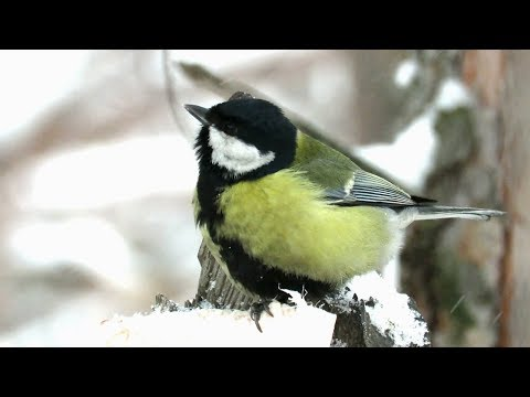 Вопрос: Где птицы зимой находят воду, если водоемы замерзли?