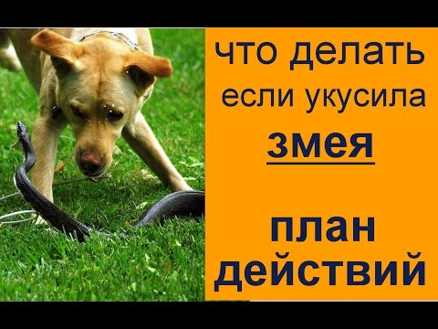 Укус собаки человека - симптомы укуса бешеной собаки