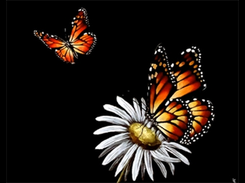 monarch butterflies acrylics on