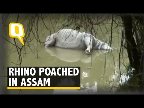 Kaziranga National Park: Another Rhino Killed by Poachers