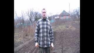 Размножение чёрной смородины (reproduction currants)