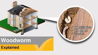 Woodworm information and treatment