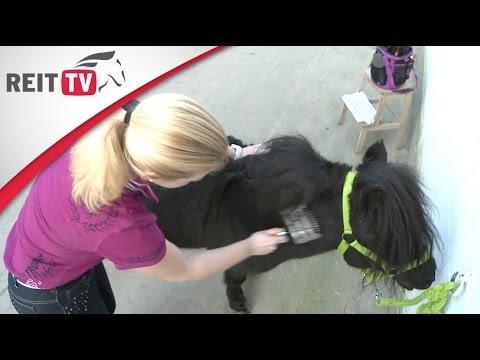 Pferdepflege: Pferde putzen im Fellwechsel - welche ist die beste Bürste?