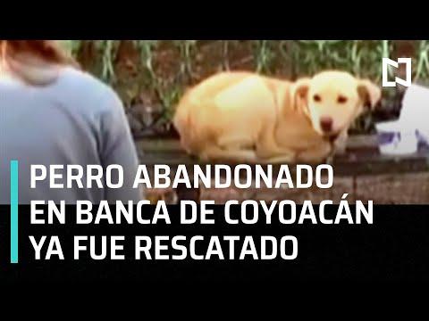Abandonan a un perro en banca de Coyoacán junto con nota - A las Tres