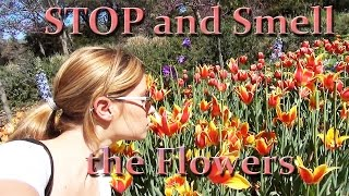 Video STOP AND SMELL THE FLOWERS download MP3, 3GP, MP4, WEBM, AVI, FLV Februari 2018