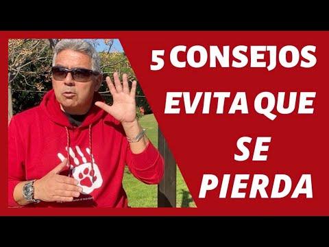 IMPORTANTE 5 CONSEJOS PARA PREVENIR QUE TU PERRO SE ESCAPE Y/O PIERDA