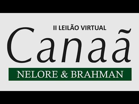 Lote 46   Forasteiro da Canaã   BCAN 3411