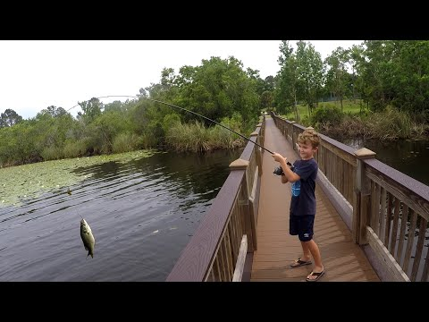 Bass Fishing From Shore In Florida With Parker - Orlando
