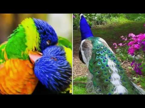 هذا خلق الله الخالق المبدع.         the world's birds colors and Creationالتفكر في خلق الله