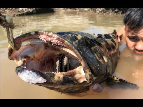 Primitive Technology with Survival Skills Casting Fish-hook and Giant Fishing (looking for food)