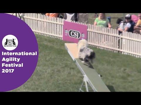 Kennel Club British Open Semi Final - Medium   International Agility Festival 2017
