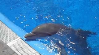 Игра с дельфином в Мундомаре,Бенидорм