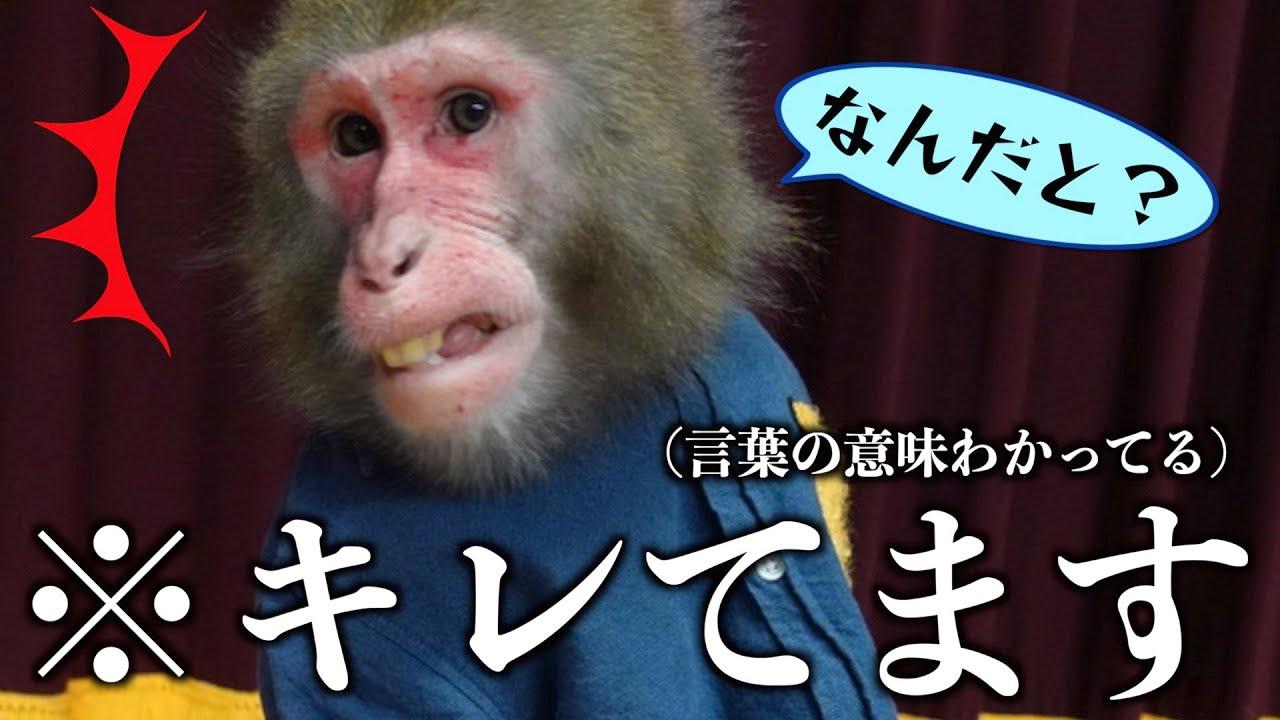 お猿さんに「大好き」の言い方で「大嫌い」と言ってみたら…天才でした。