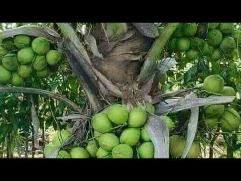 FARM LOT IN STA MARIA LAGUNA