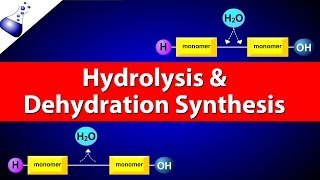 Hydrolysis and Dehydration Synthesis