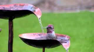 Hummingbird bath - close up 2