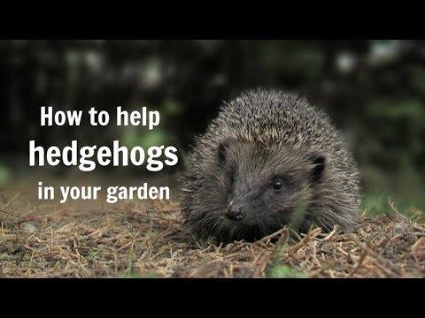 The Wildlife Garden Project - How to help hedgehogs in your garden