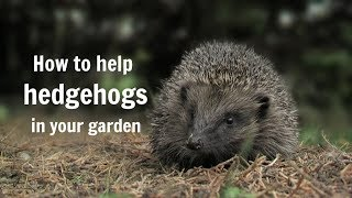 The Wildlife Garden Project - How To Help Hedgehogs In Your Garden