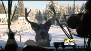 Deer Poachers Arrested, Washington Game Wardens