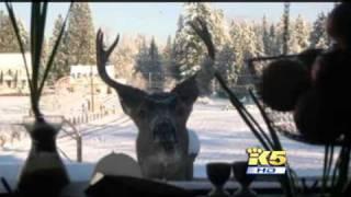 Deer Poachers Arrested, Washington Game Wardens