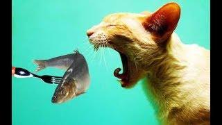 Какие продукты опасны для кошки? Топ 5 вредных продуктов для кошки. Часть 1