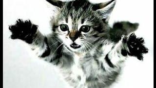 Злой котёнок нападает на хозяйку. Angry kitten attacks the owner