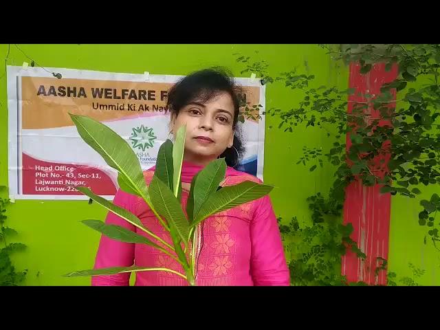 लखनऊ में स्वच्छ पर्यावरण के लिए हुआ पौधरोपण आशा वेलफेयर फाउंडेशन का पौधरोपण अभियान  लखनऊ। कोरोना के