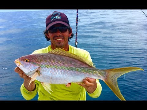 Monster yellowtail snapper, cobia, tuna and more... Crazy offshore bite!