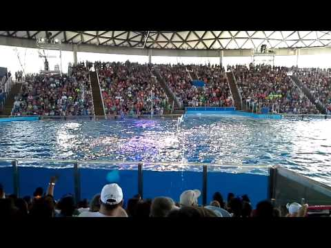 Shamu Show at Sea World San Antonio Tx