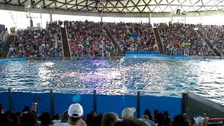 Shamu Show at Sea World San Antonio Tx