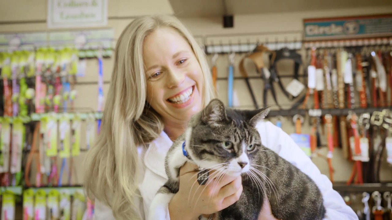 VIP Petcare | Mobile Pet Clinic | Affordable Pet Care & Vet