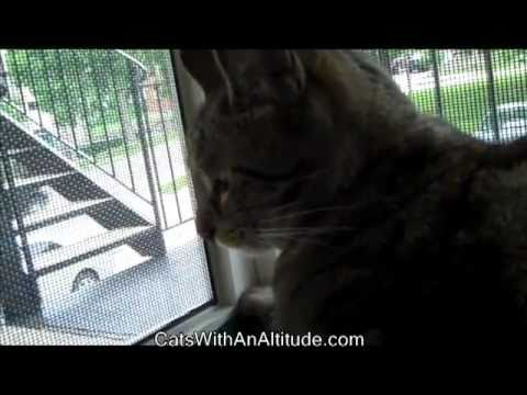 Installing The Cat Window Patio By Catswithanaltitude Com