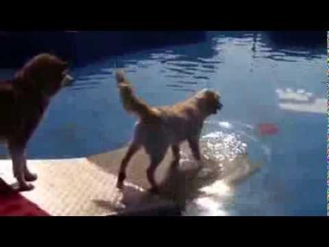 Swimming dogs la piscina per cani youtube - Piscina per cani ...