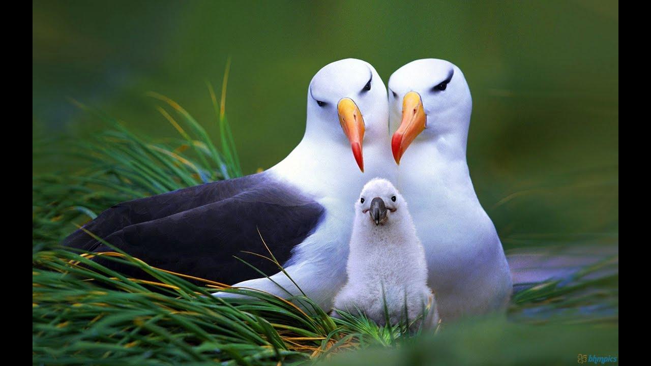 Amazing Nature - Beautiful Birds - YouTube