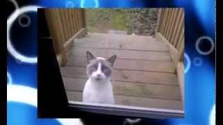 Мега прикольный говорящий кот