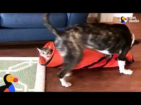 Cat Pulls Magic Trick On Dog Brother | The Dodo