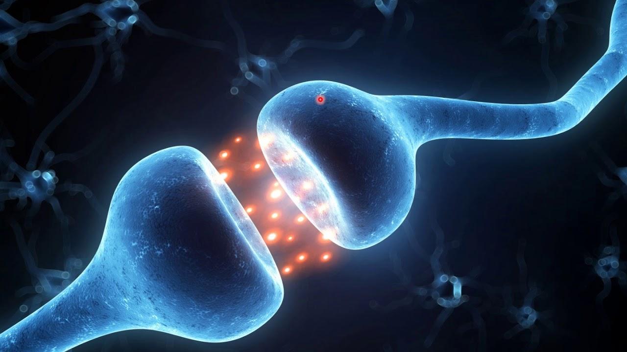 1 Het Brein En Leren Een Introductie