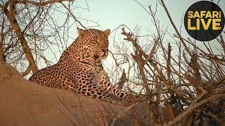 safariLIVE - Sunset Safari - October 26, 2018